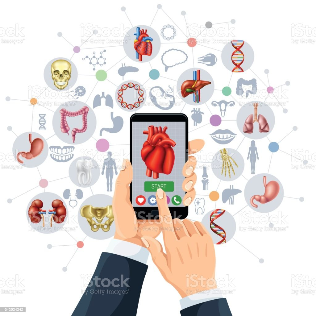 Human Anatomy App vector art illustration