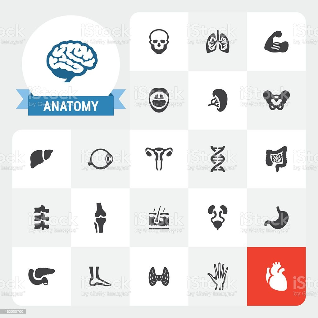 Human Anatomy base vector icons and label vector art illustration