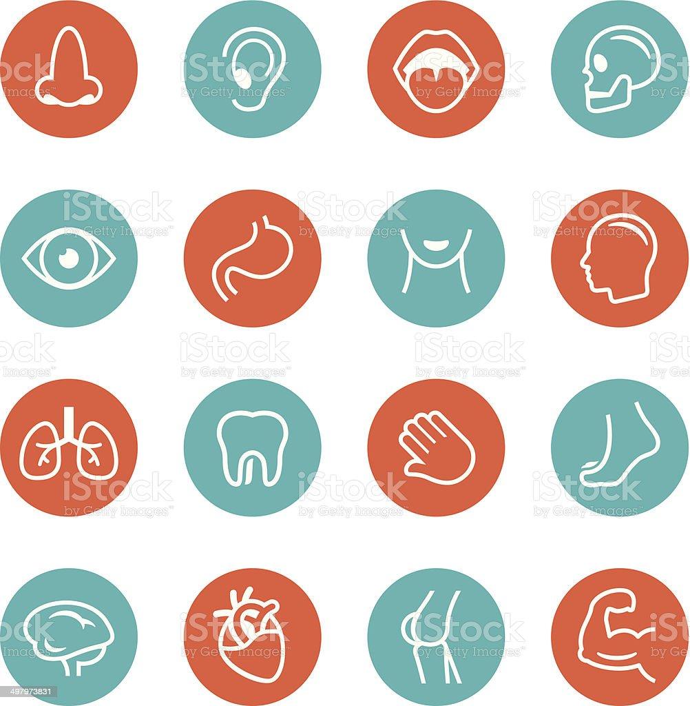 Human Anatomy Cirlce Icons vector art illustration