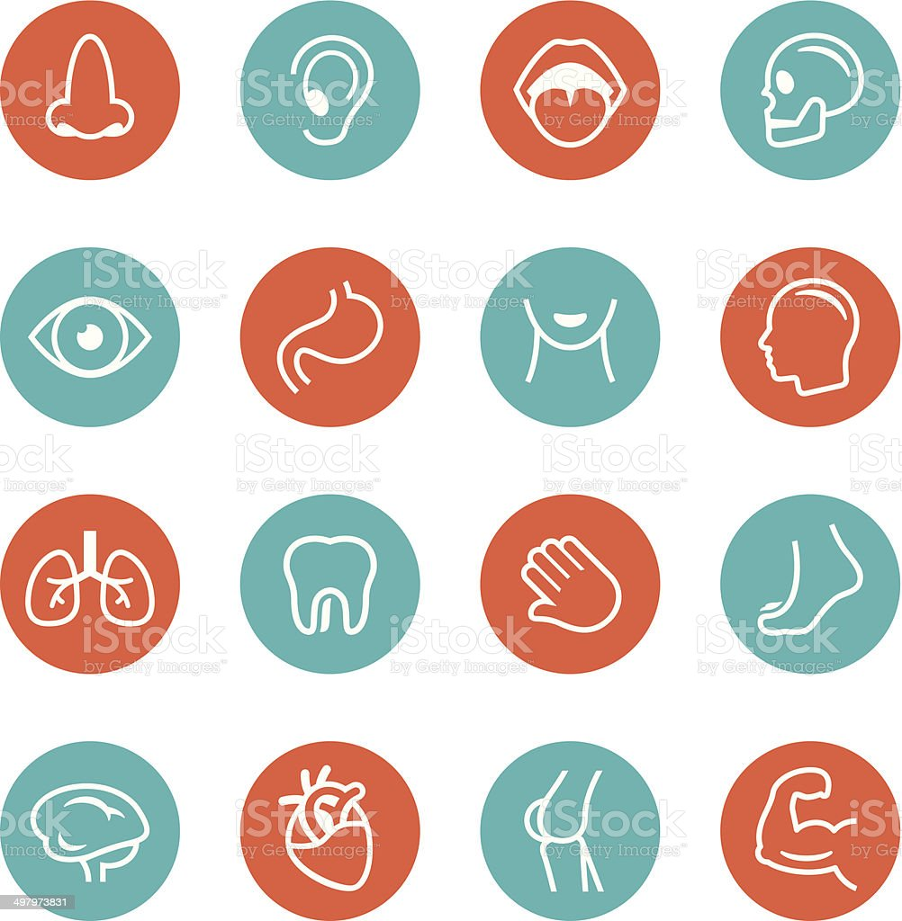 Human Anatomy Cirlce Icons vector art illustration