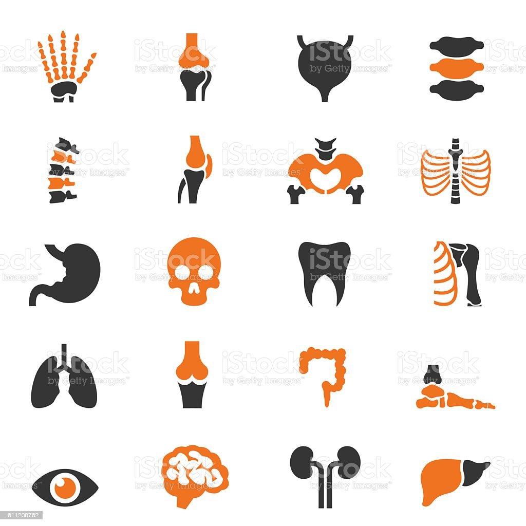 Human anatomy icon set vector art illustration