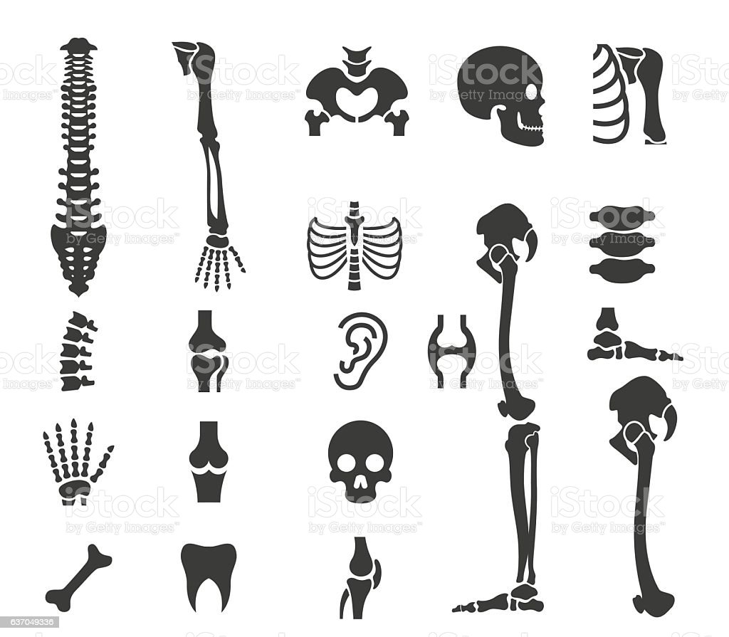 Human anatomy icon set vector art illustration