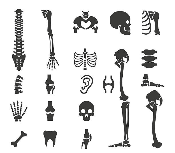 Physiology Clip Art, Vector Images & Illustrations - iStock