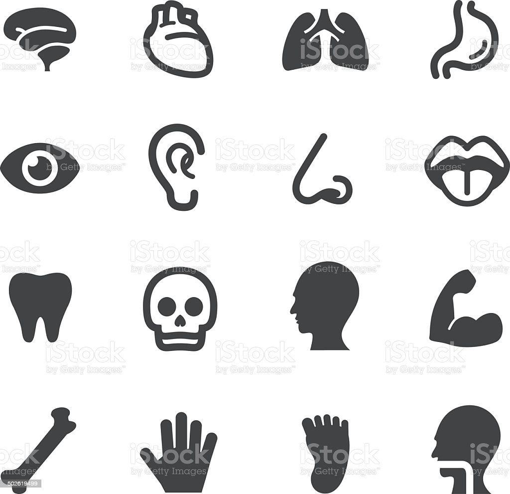 Human Anatomy Icons - Acme Series vector art illustration