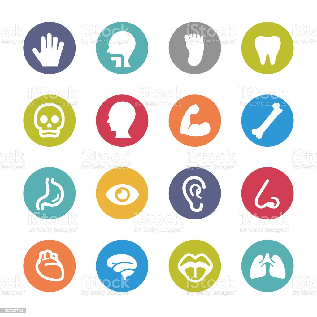 Human Anatomy Icons - Circle Series vector art illustration