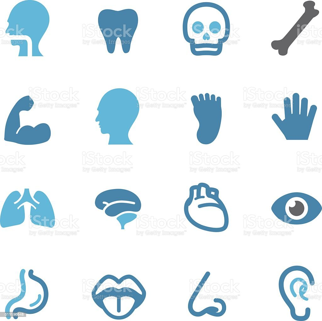 Human Anatomy Icons - Conc Series vector art illustration