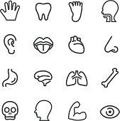 Human Anatomy Icons - Line Series