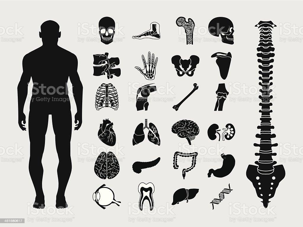 Human anatomy icons vector art illustration