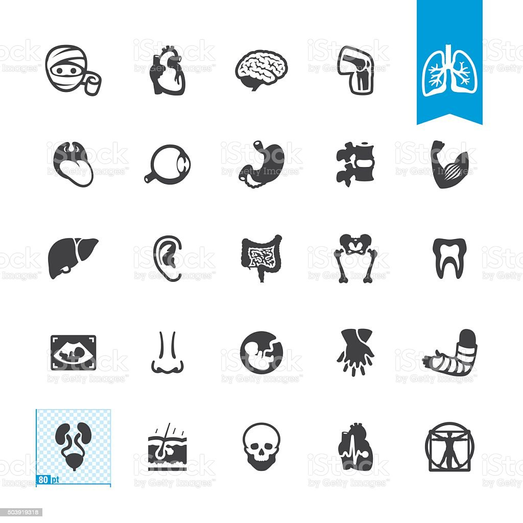 Human Anatomy related vector icons vector art illustration
