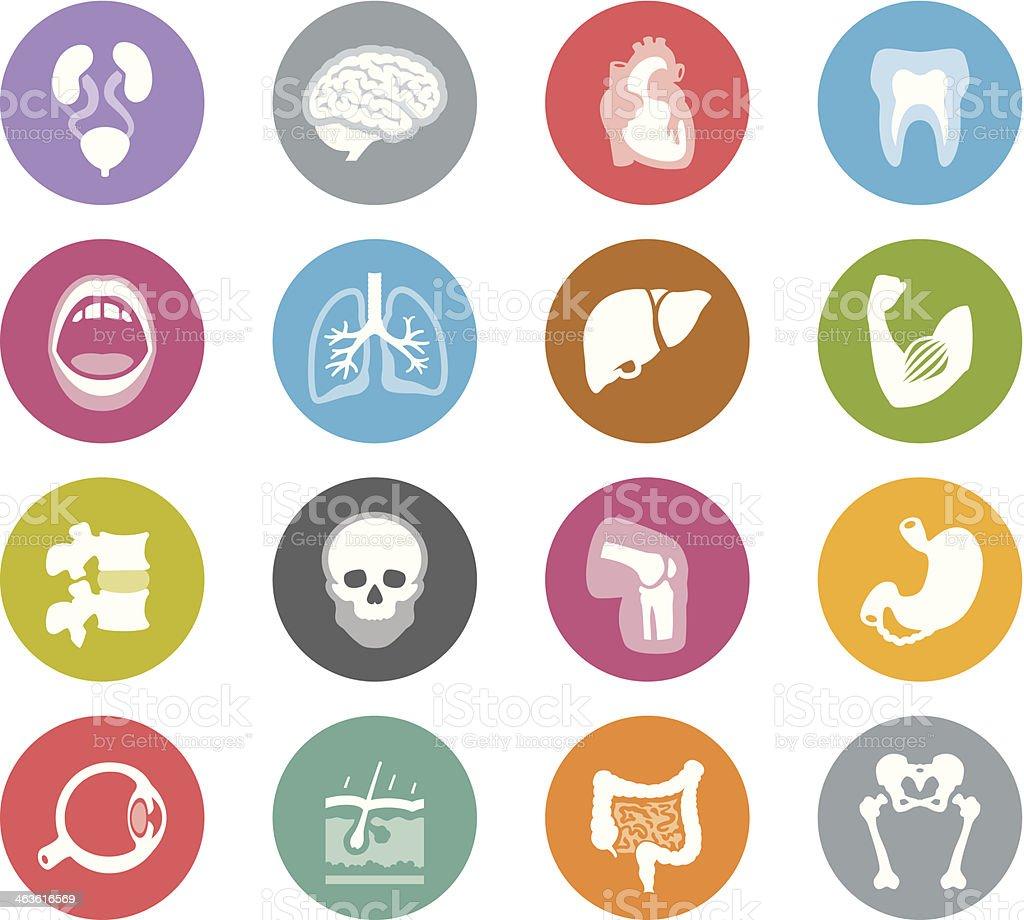 Human Anatomy / Wheelico icons vector art illustration