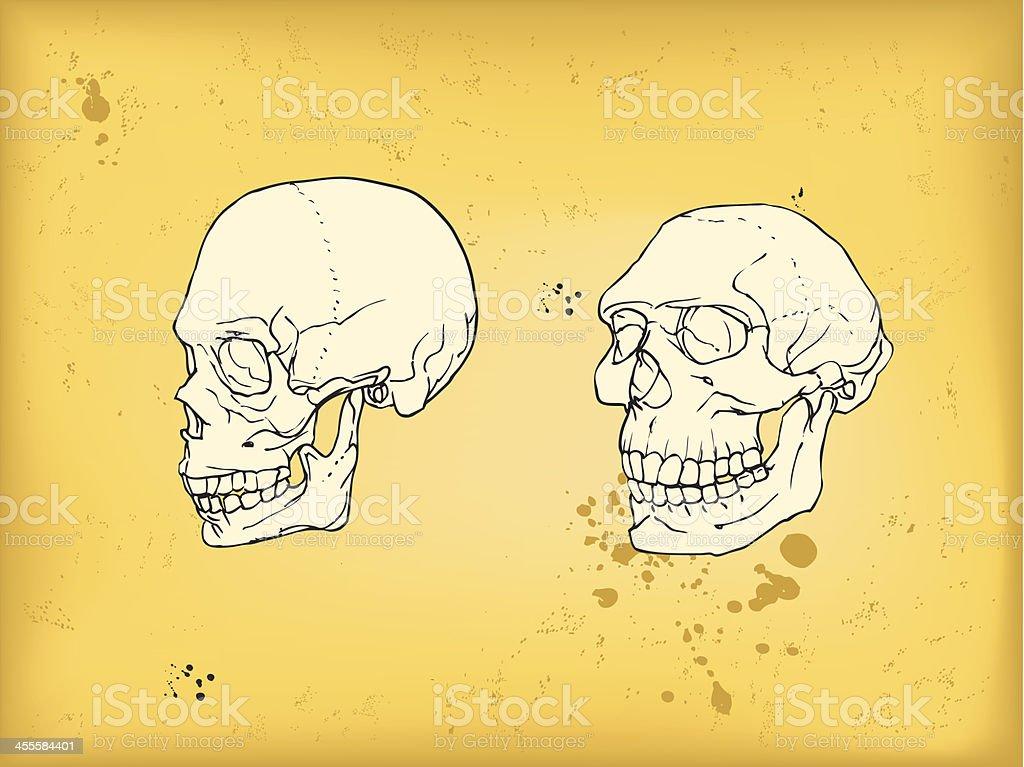 Human and neanderthal skull vector art illustration