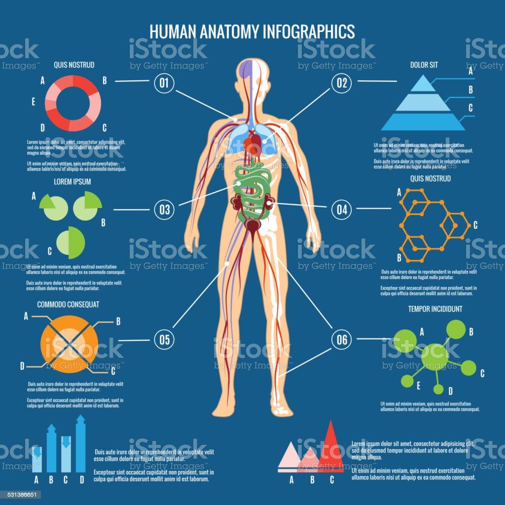 Human Body Anatomy Infographic Design vector art illustration