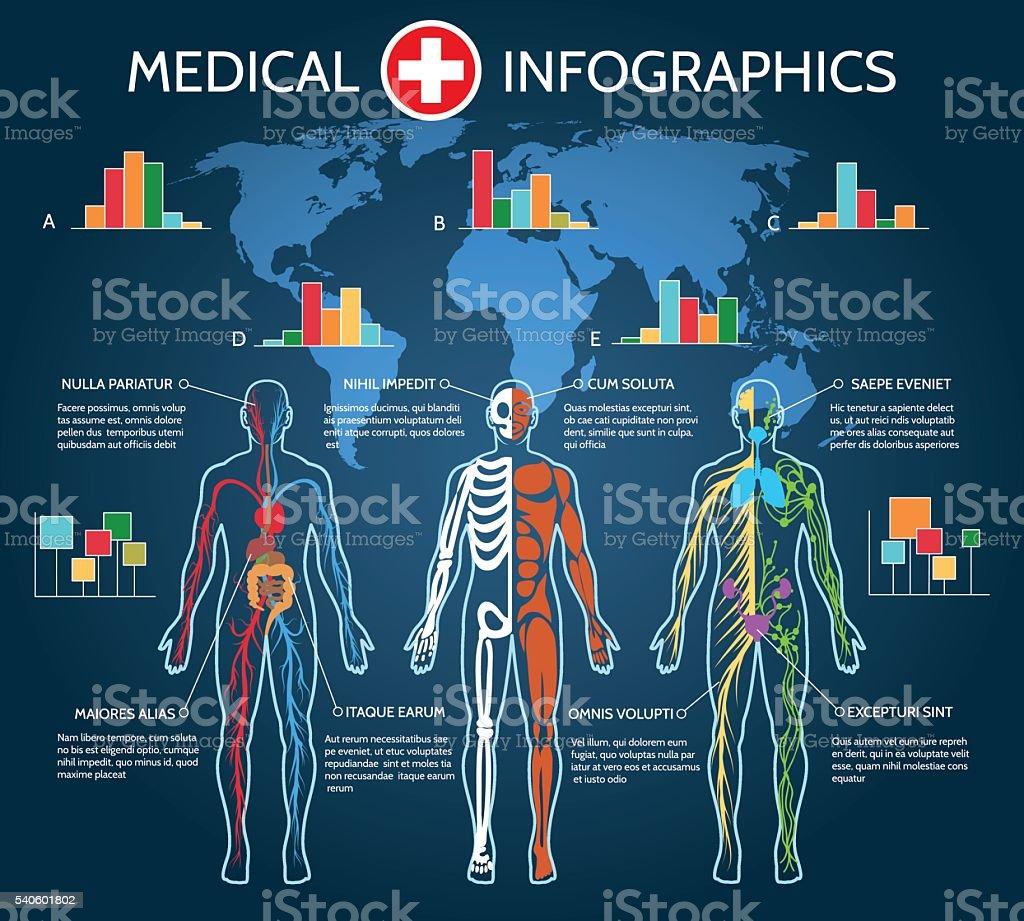 Human Body Anatomy Infographic vector art illustration