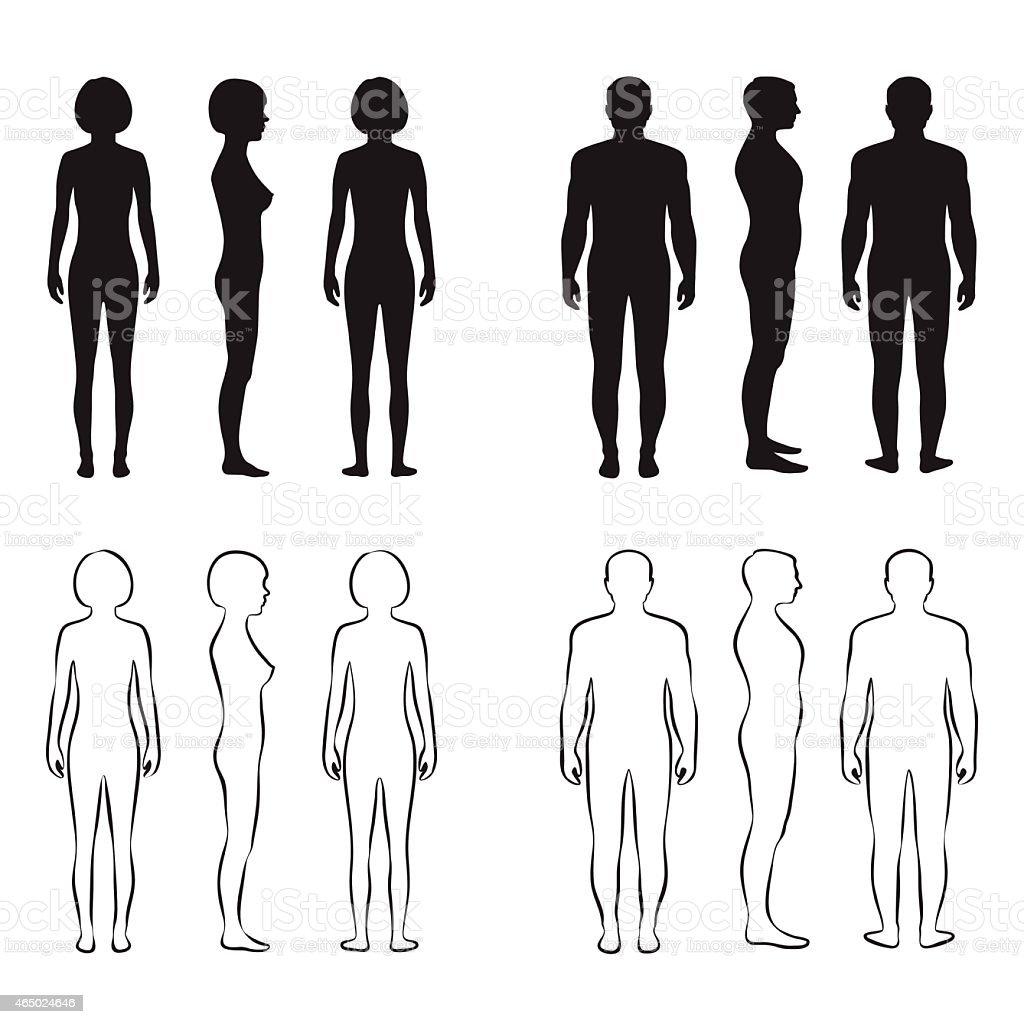 human body anatomy, vector art illustration
