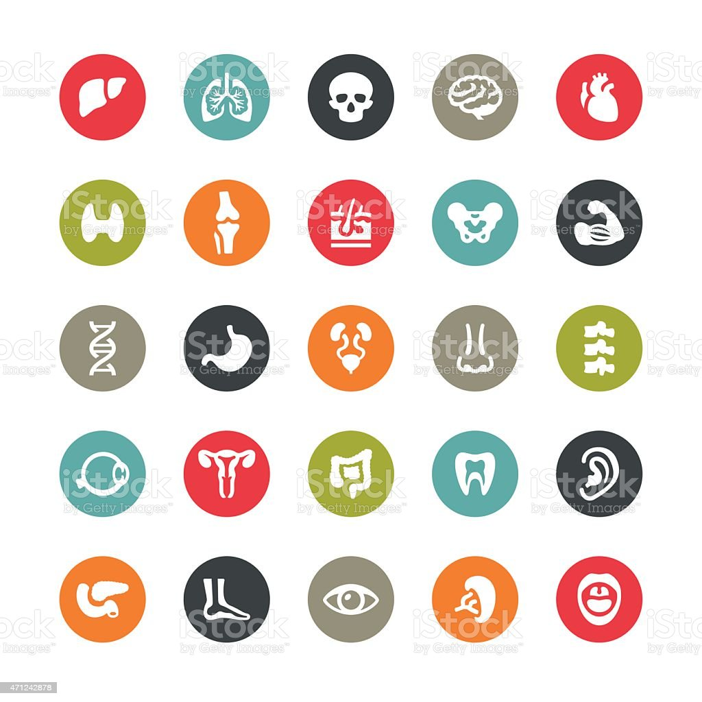 Human body and internal organ related vector icons / Ringico series vector art illustration