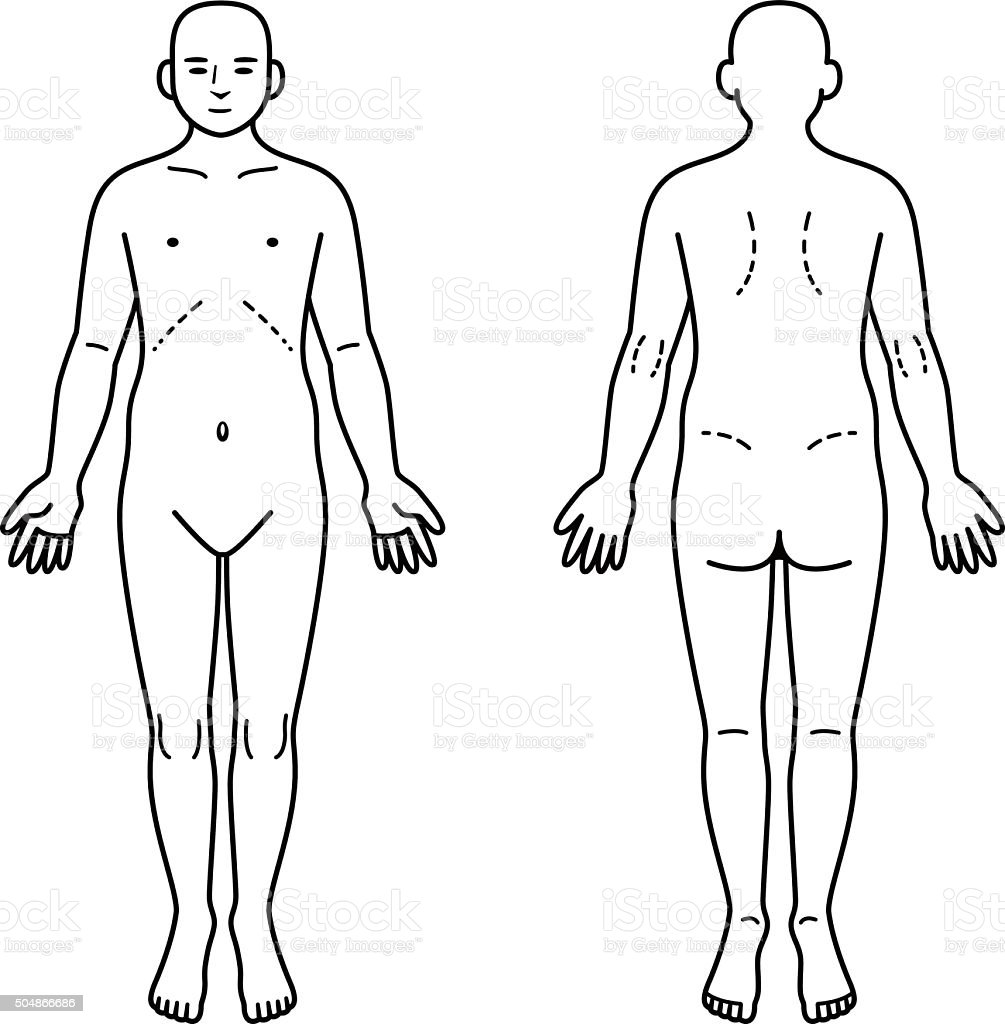 Human body front and back vector art illustration