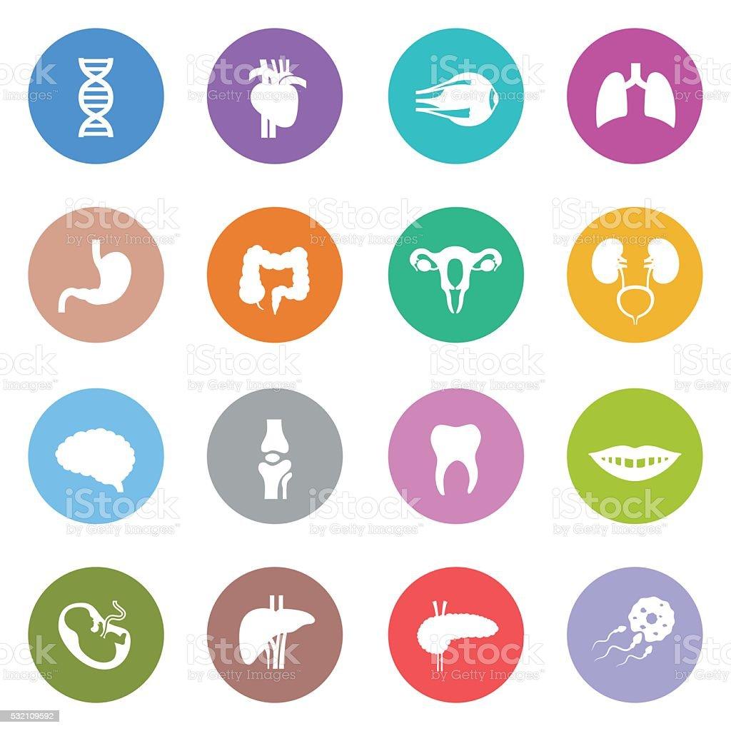Human Body Icon Set vector art illustration
