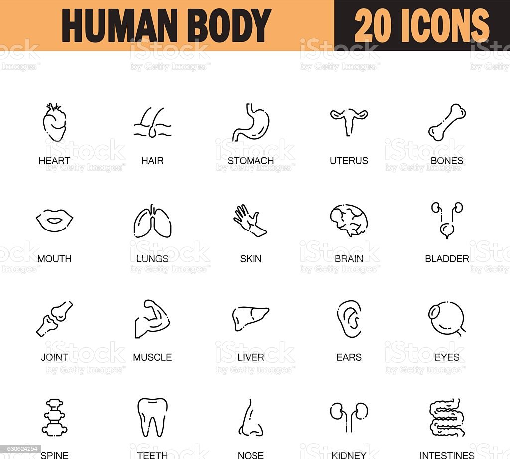 Human body icon set vector art illustration