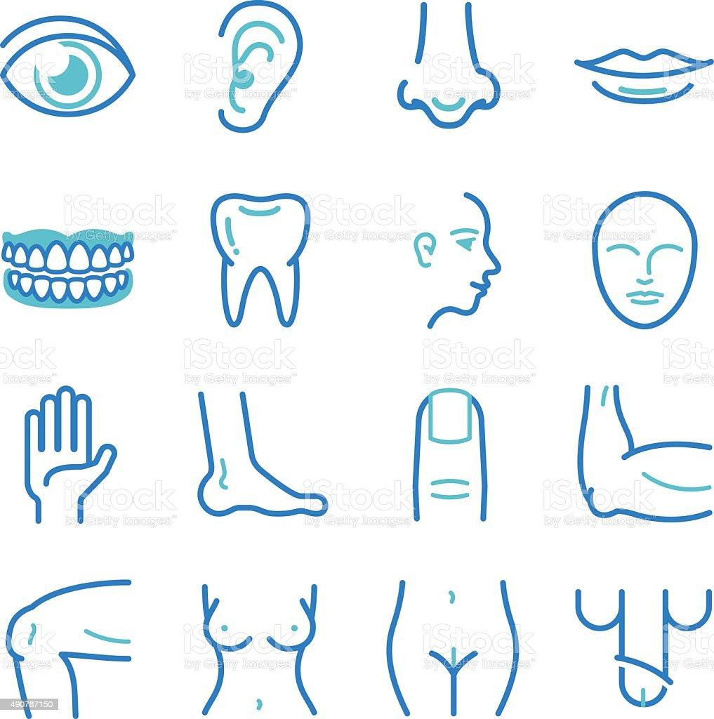 Human body icons vector art illustration