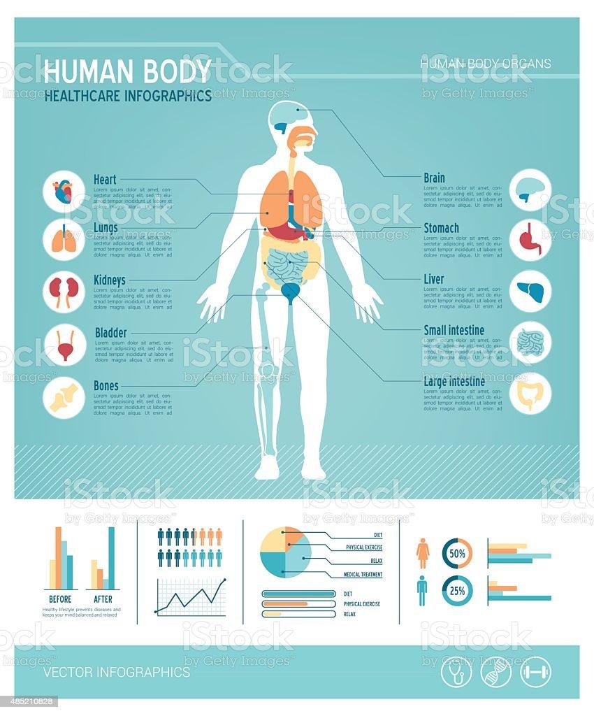 Human body infographics vector art illustration