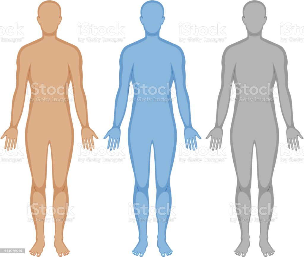 Human body outline in three colors vector art illustration