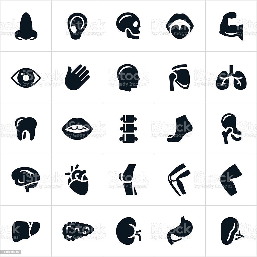 Human Body Parts Icons vector art illustration