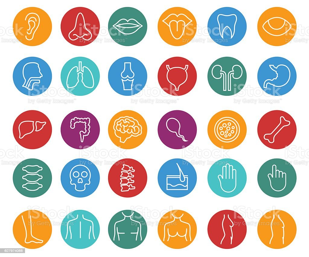 Human body parts vector art illustration