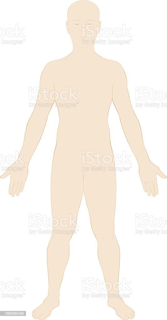 Human Body Surface Anatomy - Colour royalty-free stock vector art