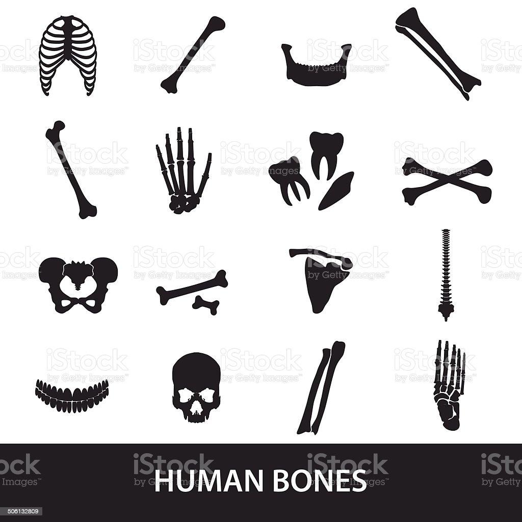 human bones set of icons eps10 vector art illustration