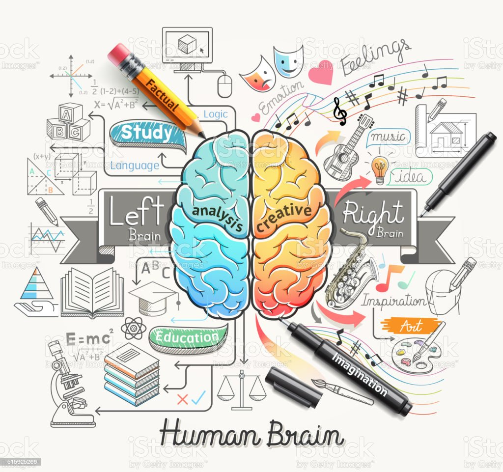Human brain diagram doodles icons style. vector art illustration