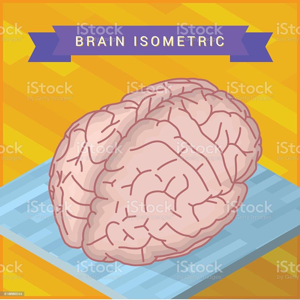 human brain flat isometric icon vector art illustration