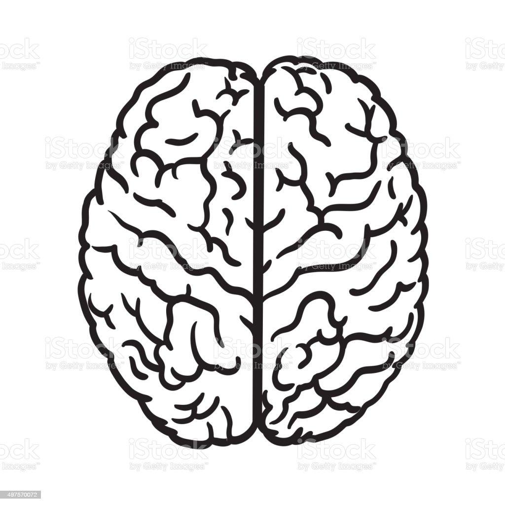 human brain icon vector art illustration