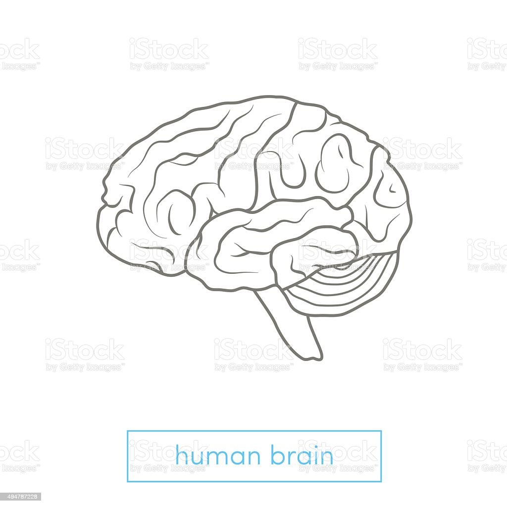 Human brain illustration vector art illustration