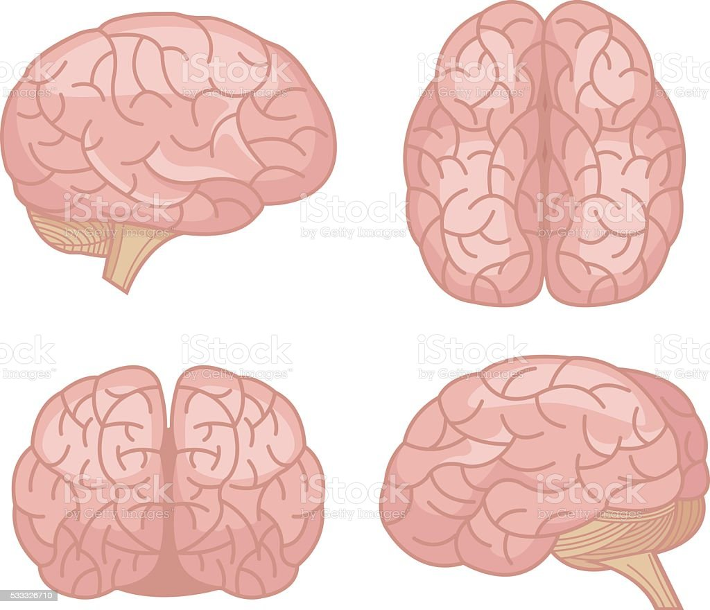 Human brain. Vector flat cartoon set vector art illustration