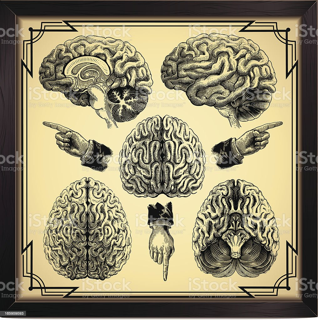 Human Brain vector art illustration