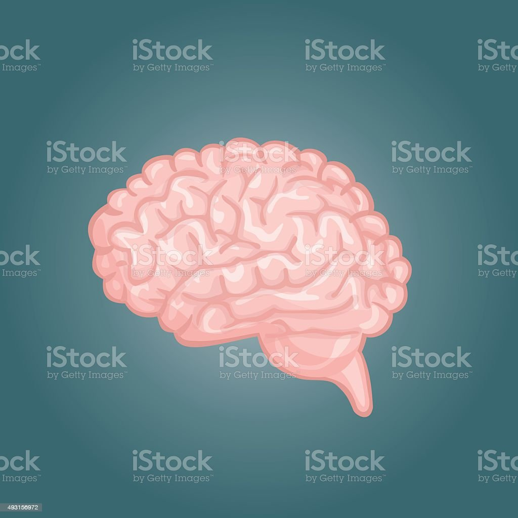 Human brain views. Top, frontal, side, three-quarter. Flat vector icons. vector art illustration
