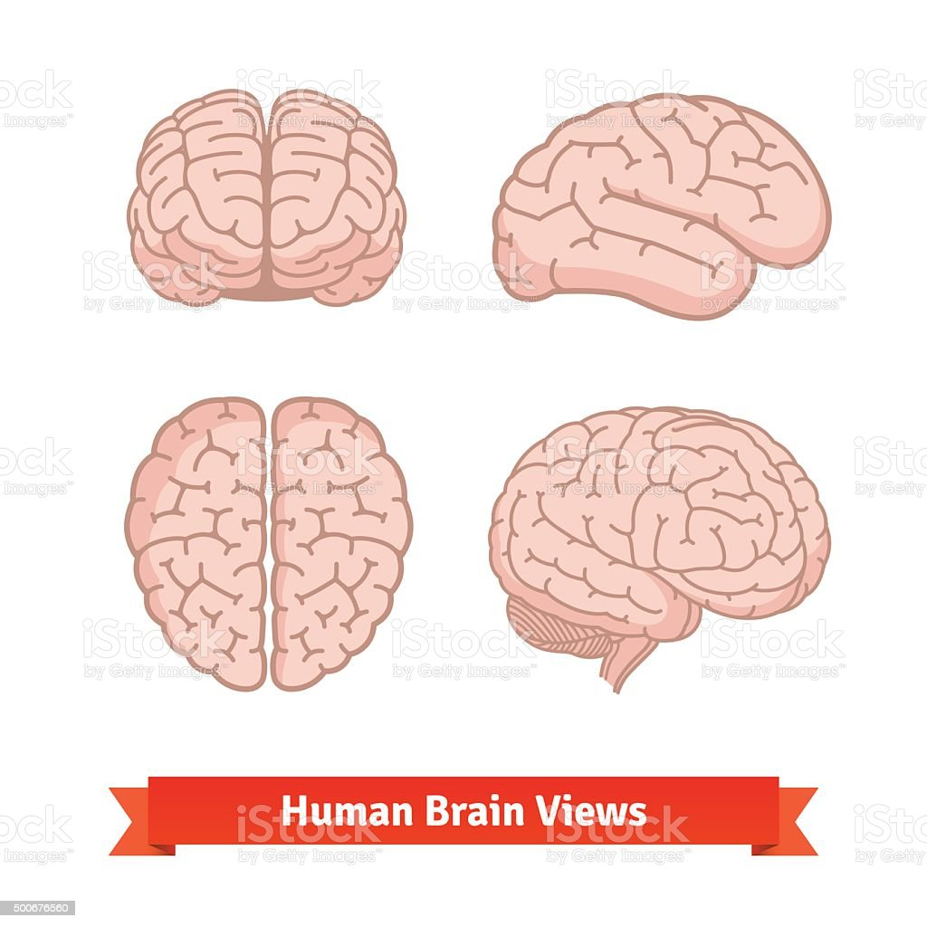 Human brain views. Top, frontal, side. vector art illustration