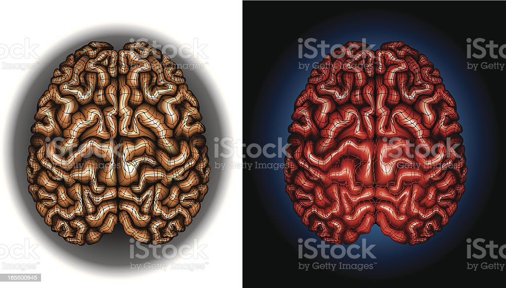 Human Brains royalty-free stock vector art
