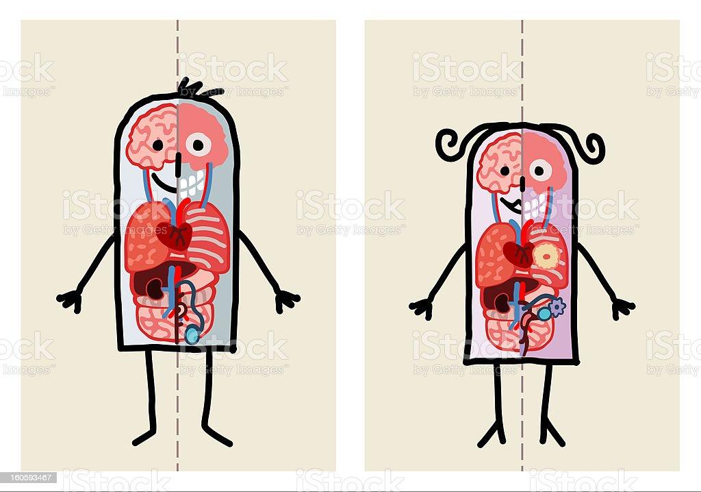 human couple  anatomy royalty-free stock vector art