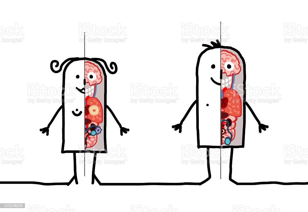human couple  anatomy vector art illustration