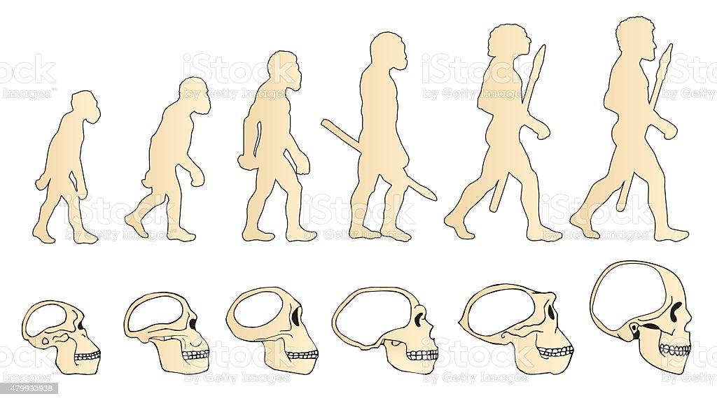Human Evolution Of The Skull. Historical Illustrations. vector art illustration