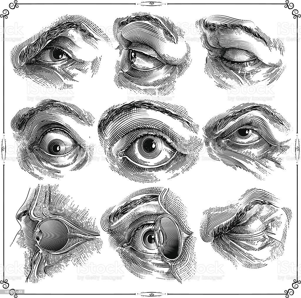 Human eyes vector art illustration