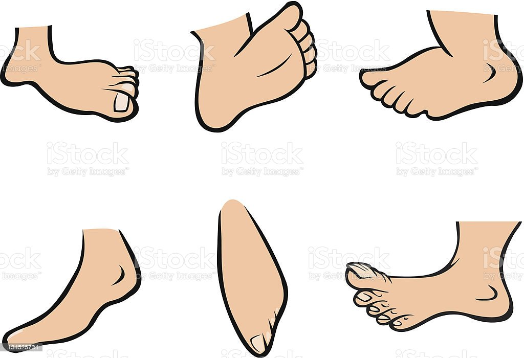 human feet vector art illustration