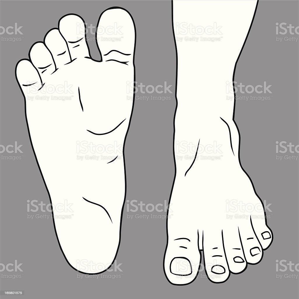Human Foot vector art illustration