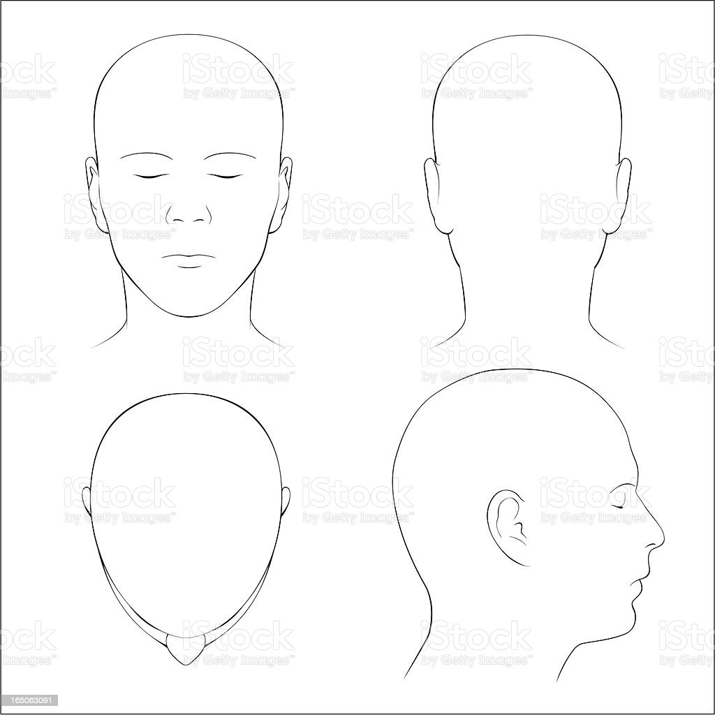 Human Head Surface Anatomy - Outline vector art illustration