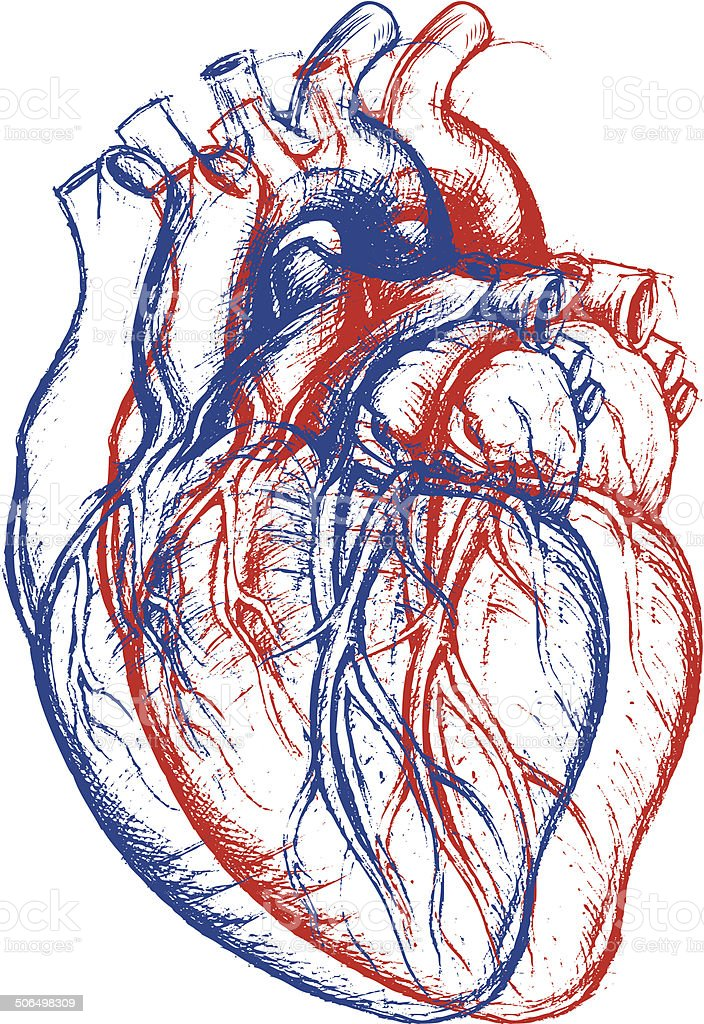Human Heart 3D vector art illustration