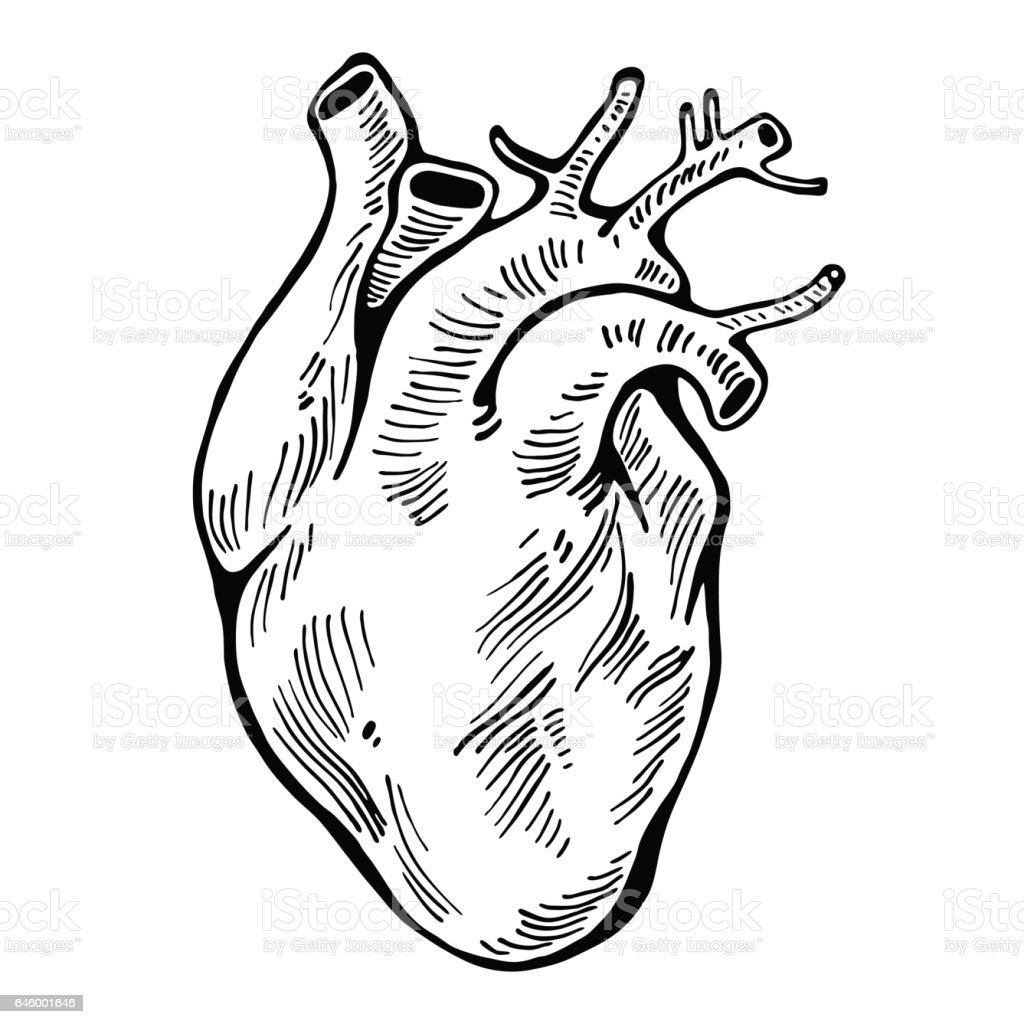 human heart black line tattoo organ vector illustration stock, Muscles