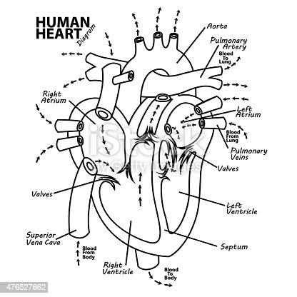 Human Heart Diagram Anatomy Tattoo stock vector art