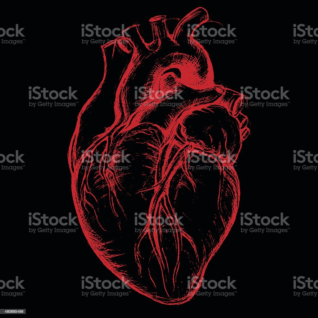 Human Heart Drawing line work vector art illustration