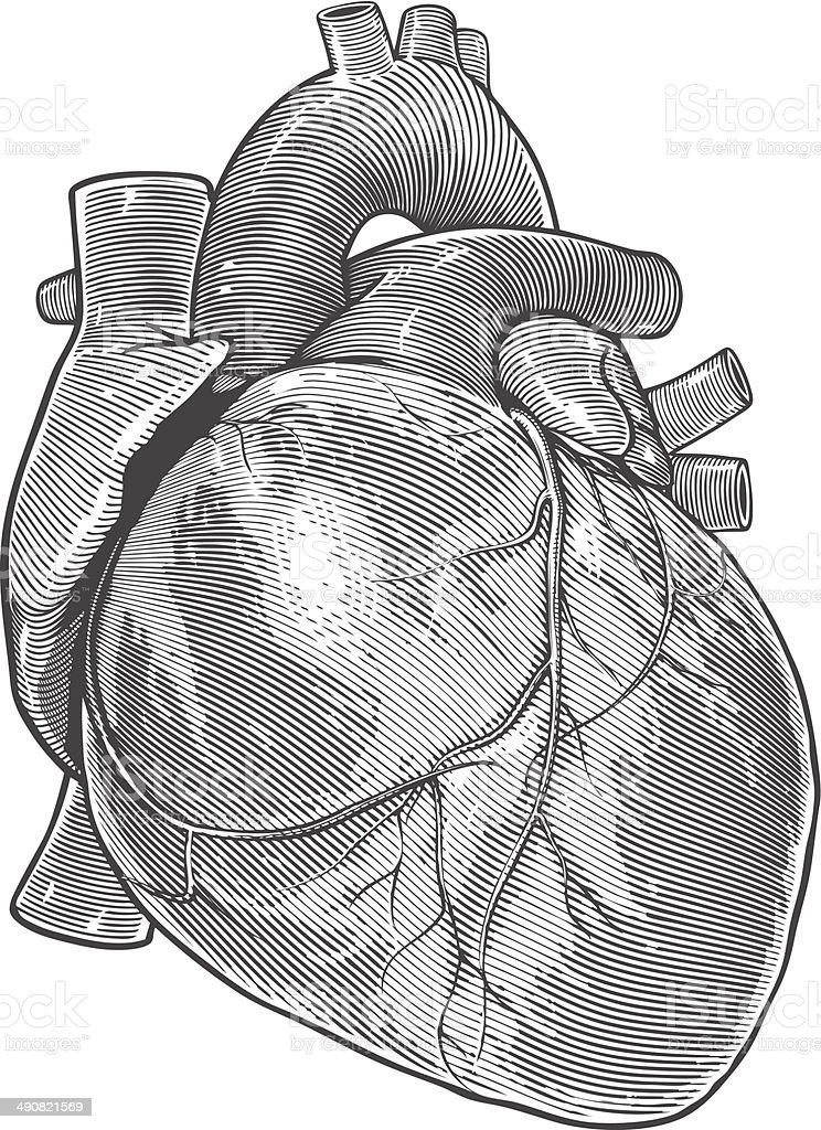 Human heart in vintage engraving style vector art illustration